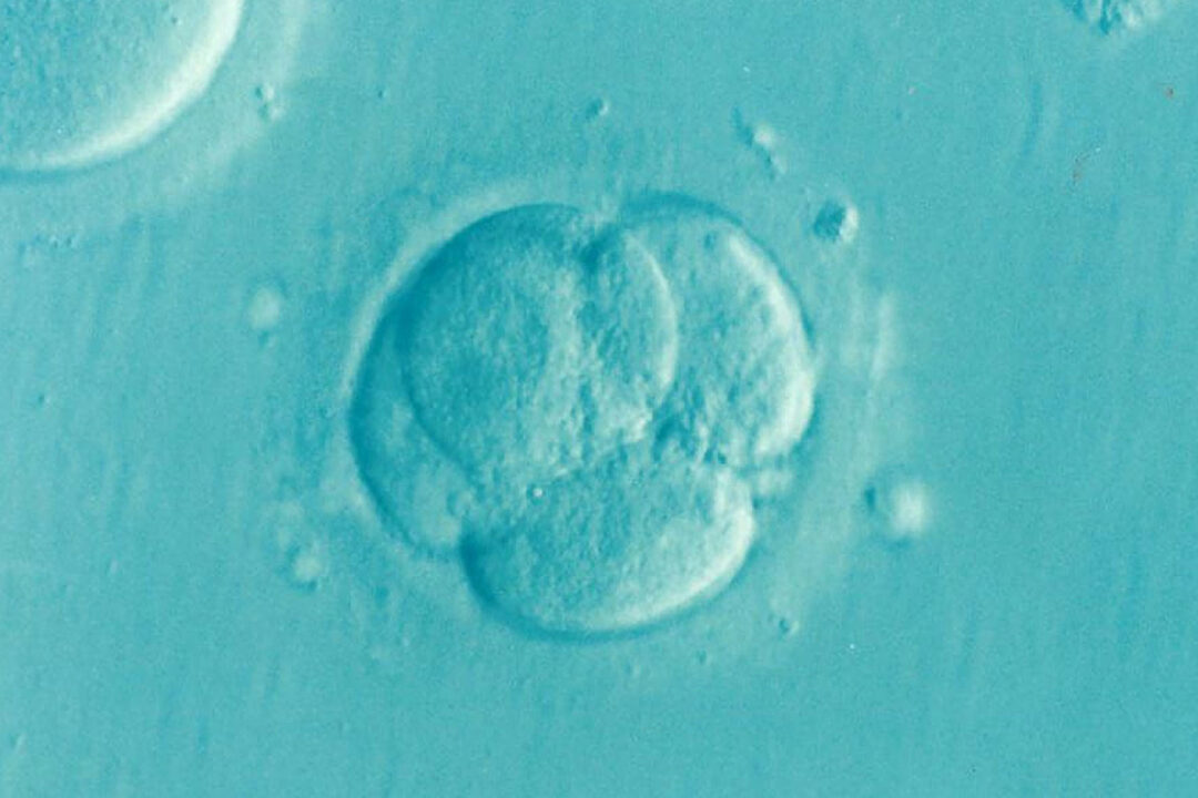 Técnicas de preservación de la fertilidad